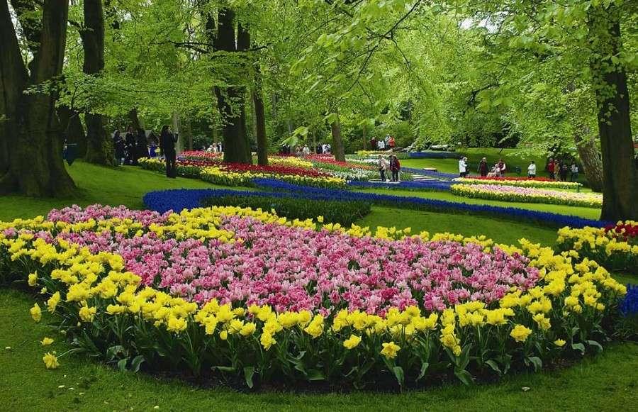 Мягкий и влажный климат Голландии - идеальное место для выращивания тюльпанов