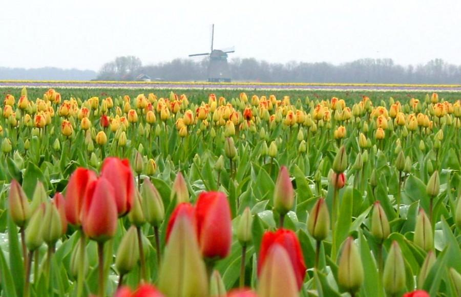 Лучший способ оценить цветы - сесть на велосипед и проехаться по округе