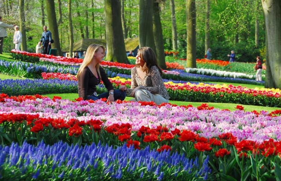 Keukenhof - весенний цветочный рай