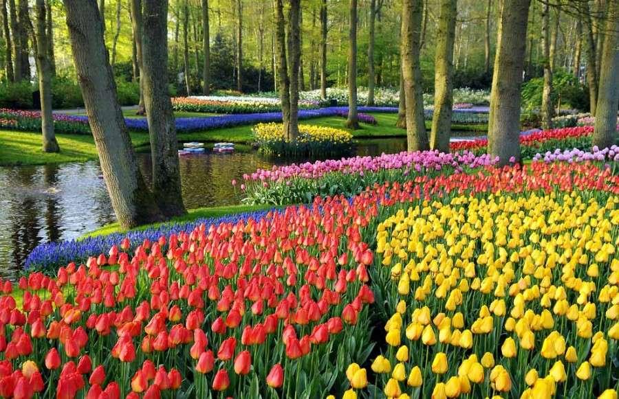 Лоскутное одеяло цветов в парке Кекенхоф, неподалеку от Лиссе в Южной Голландии