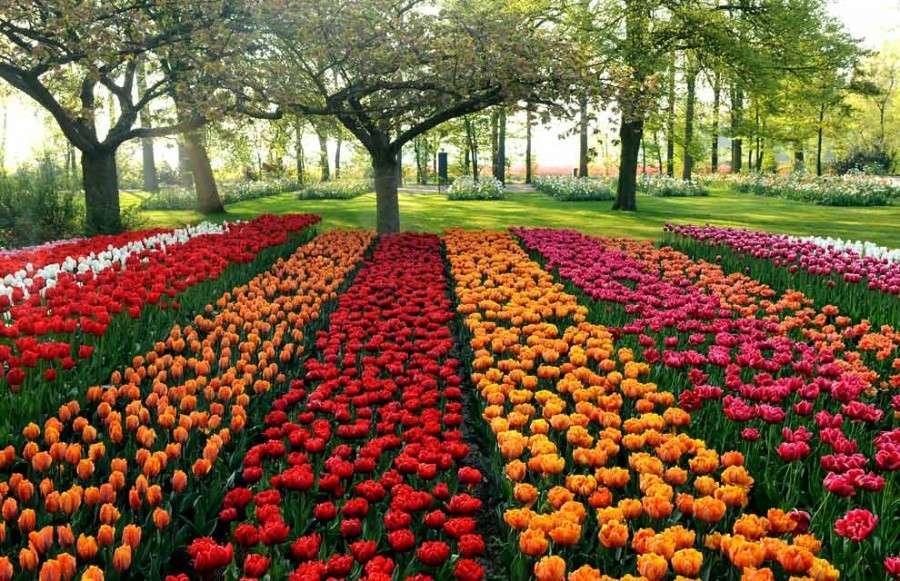 Тюльпановые дорожки