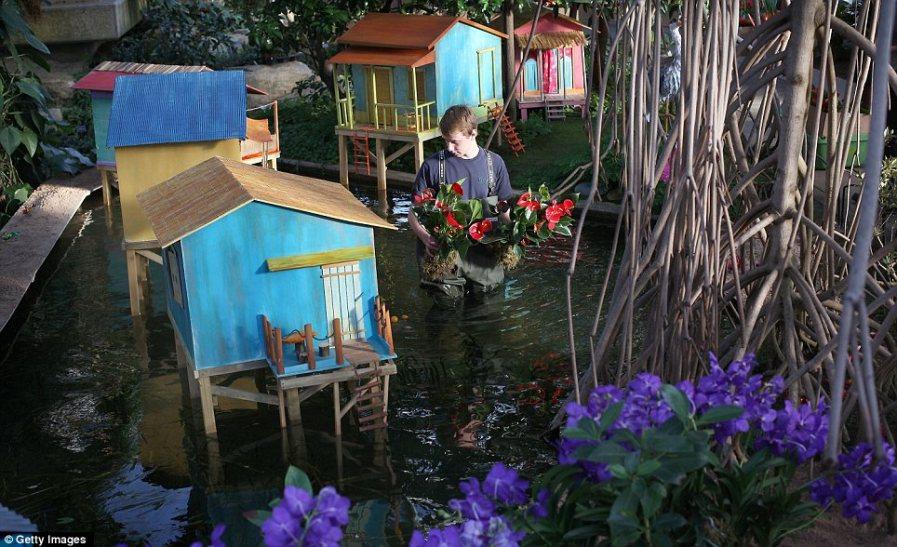 Алекс Ханки несет растения через мангровые заросли