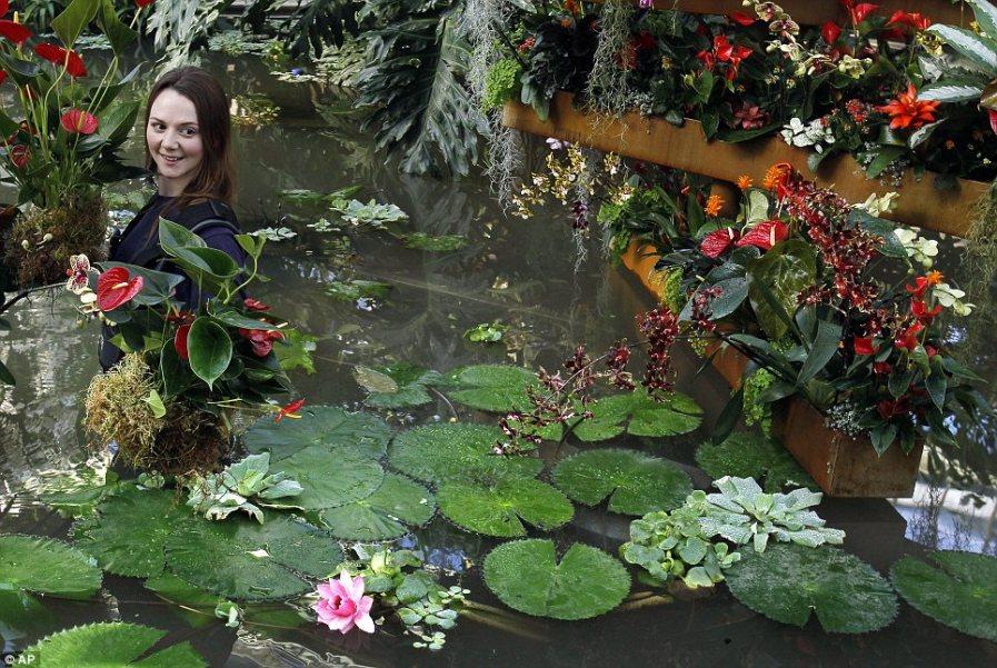 В расцвете: Помощница Кирсти Уотсон несет Антуриум через пруд