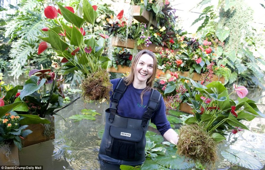 Кирсти Ватсон готова к пересаживанию растений