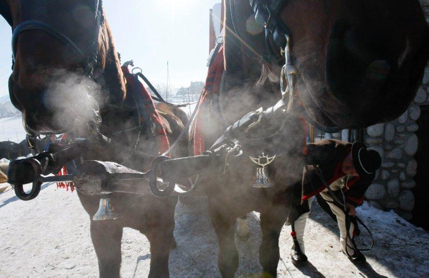 Лошади украшаются перед заездом