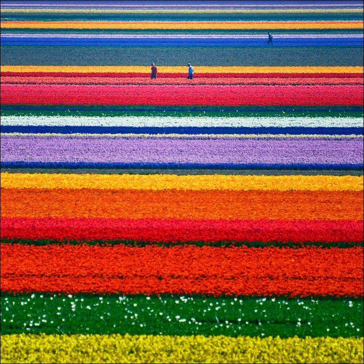 Лоскутное одеяло Голландии