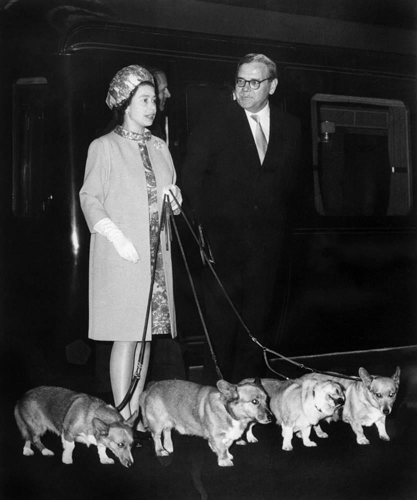 Елизаветы II прибывает на железнодорожный вокзал в Лондоне со своими 4 собаками корги 15 октября 1969 года