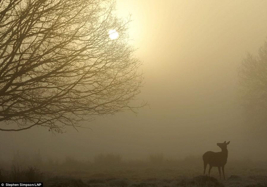 Туман в Лондоне, олени в Ричмонд парке