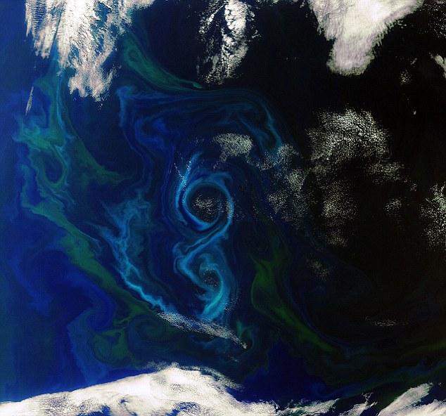 Цветение фитопланктона в южной части Атлантического океана к востоку от Фолклендских островов