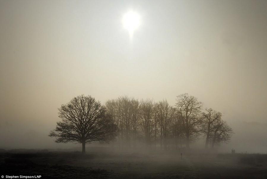Густой туман в Ричмонд парке Лондона