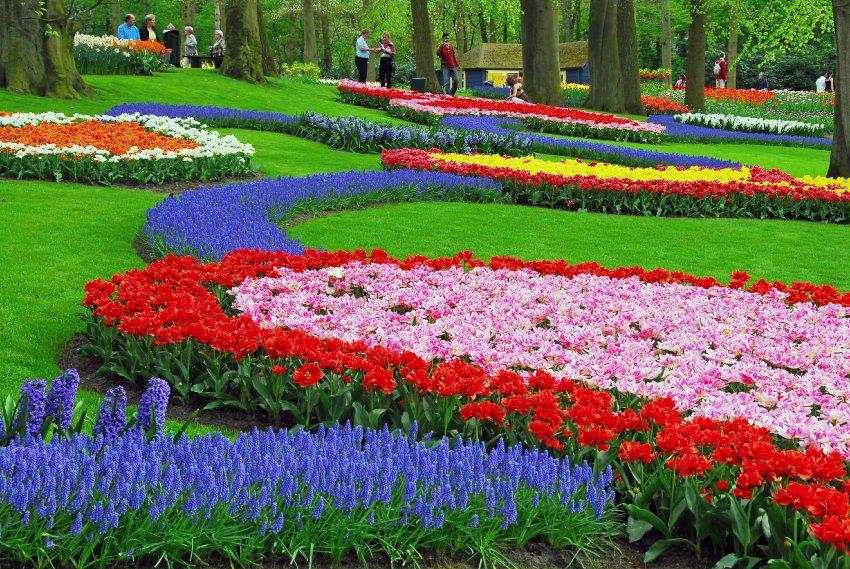 Выращиванием тюльпанов в Keukenhof занялись с конца 16 века
