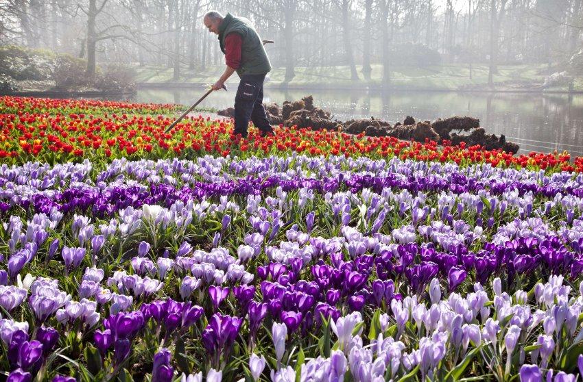 500 акров прекрасных садов расположены между Гаагой и Амстердамом