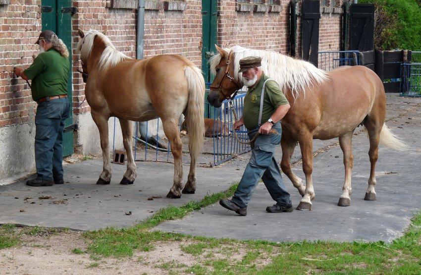 На острове организуют катания на лошадях