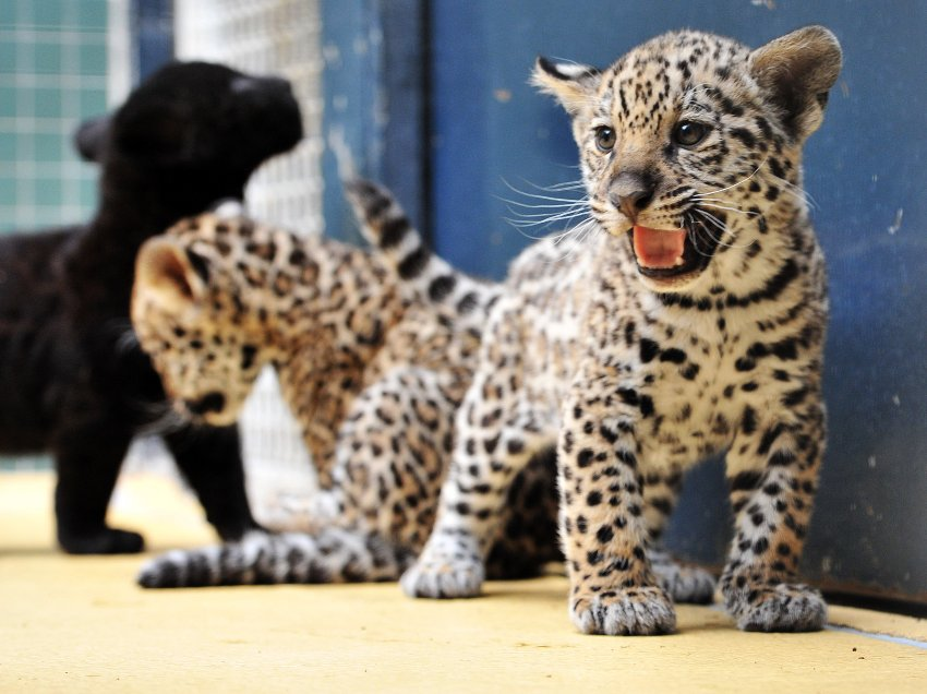 Пополнение в Берлинском зоопарке