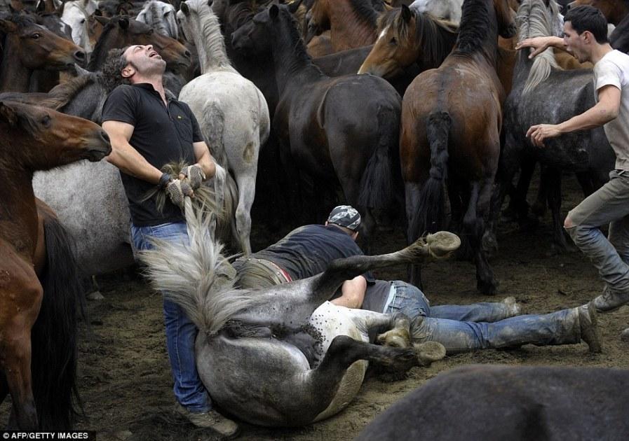 как лошадей ловят арканам