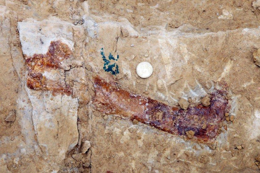 Новый вид назвали Atsinganosaurus velauciensis