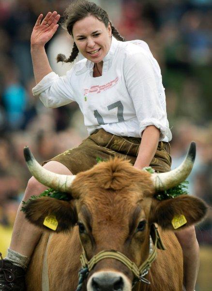 Скачки на быках в Баварии