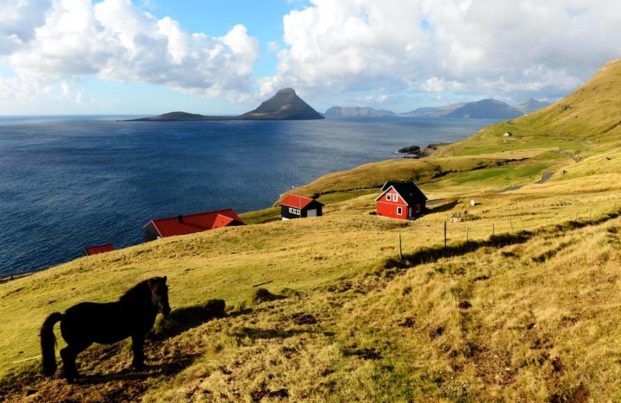 Лошадь стоит на берегу рядом с селом Velbastaour на Streymoy, фото Jonathan Nackstrand / AFP / Getty Images