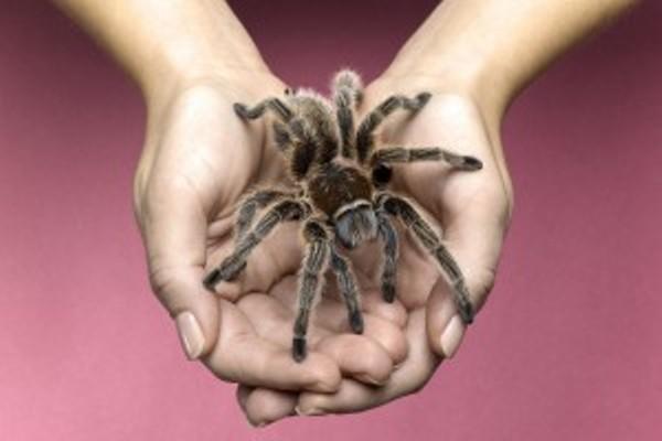 200 тарантулов в чемодане у туристов