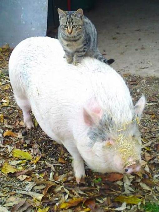 Розали и Ромео - друзья