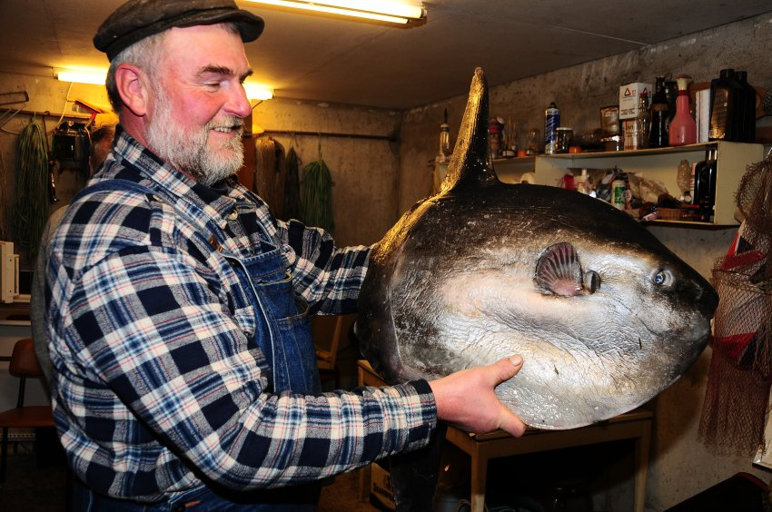 как поймать рыба луна