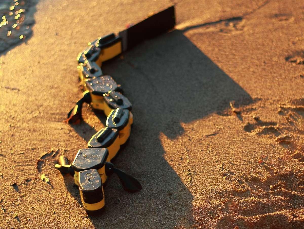Salamandra robotica II