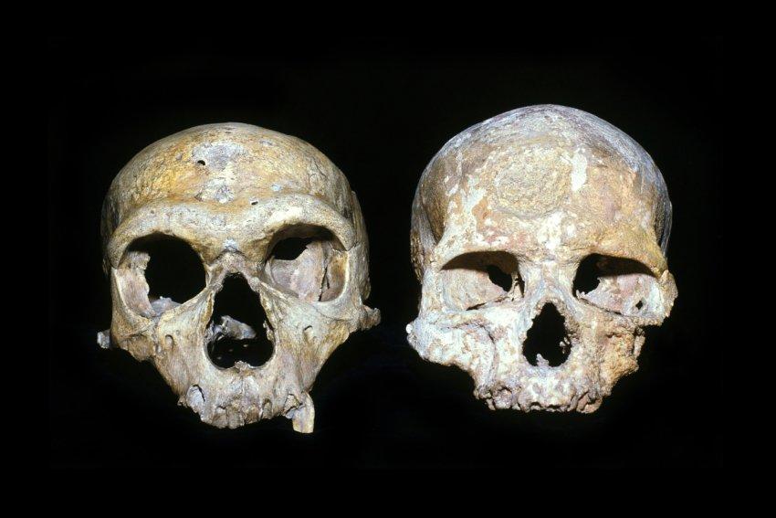 У неандертальца были слишком большие глаза