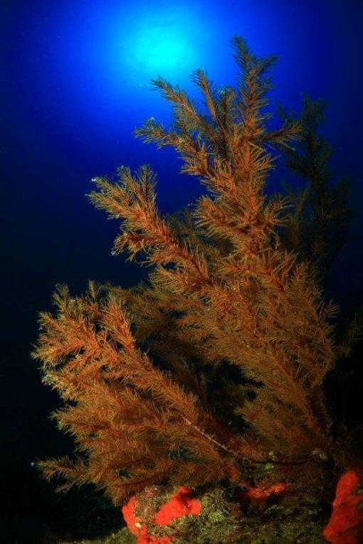 Подводный мир эль йерро после