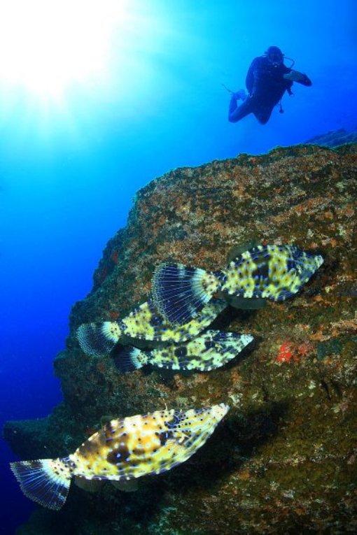 Подводный мир Эль Йерро