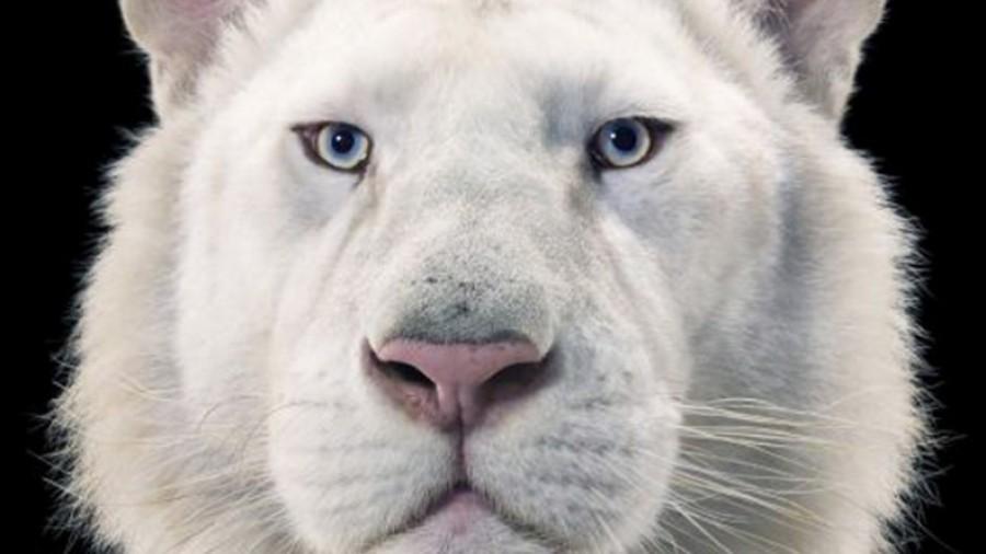 Фотографии животных Тима Флаха
