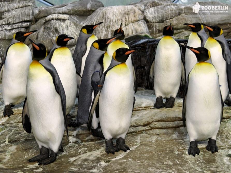 Берлинский зоопарк подари себе