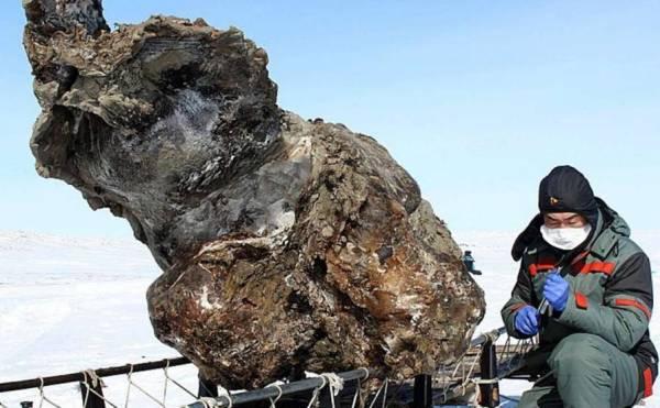 В Сибире найден труп мамонта с жидкой кровью