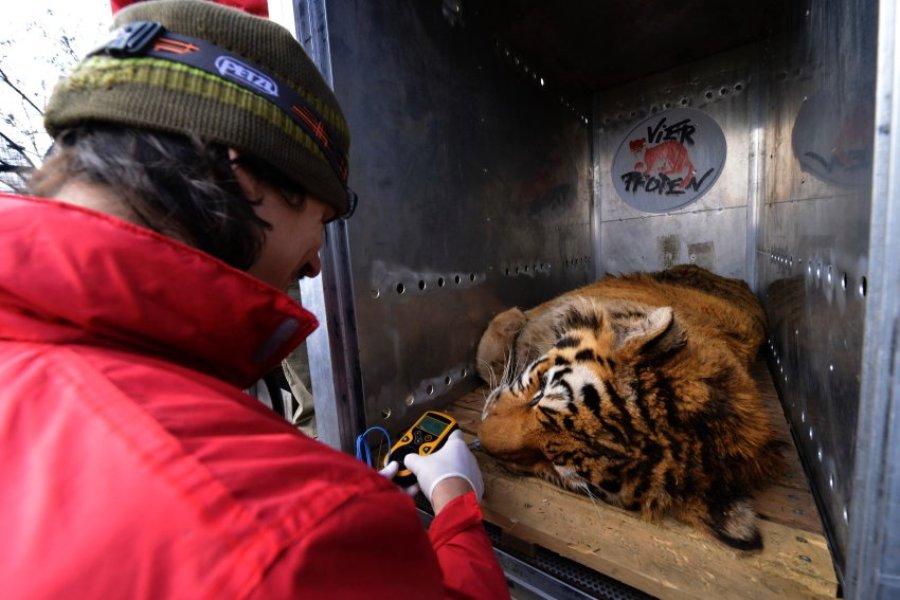 Перед тем как выпустить животное, проверяют его состояние