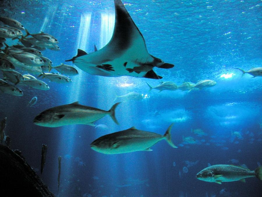 Достопримечательности Лиссабона: самый большой океанариум в Европе
