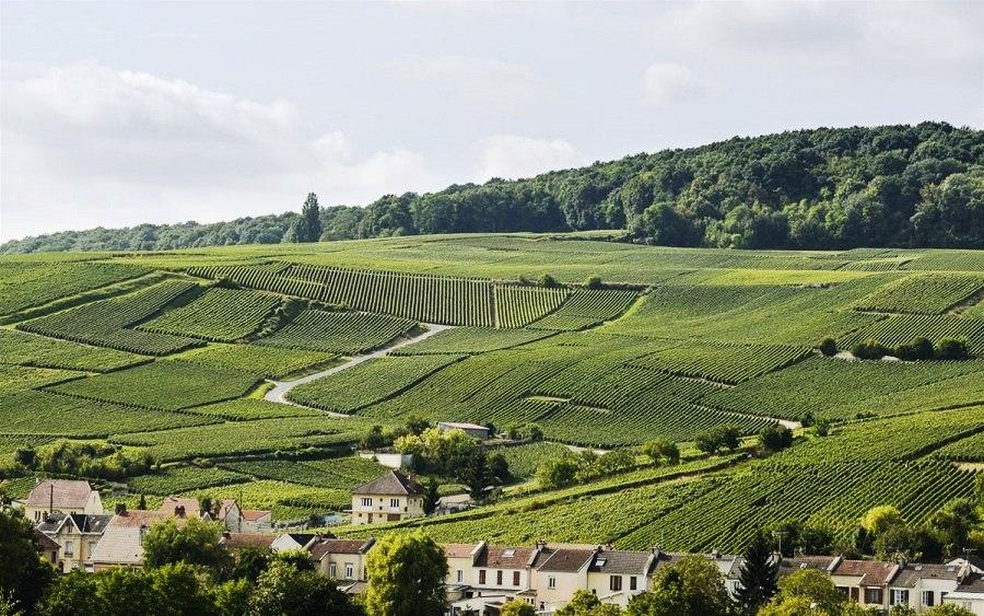 Провинция Шампань: виноградники над Эперне