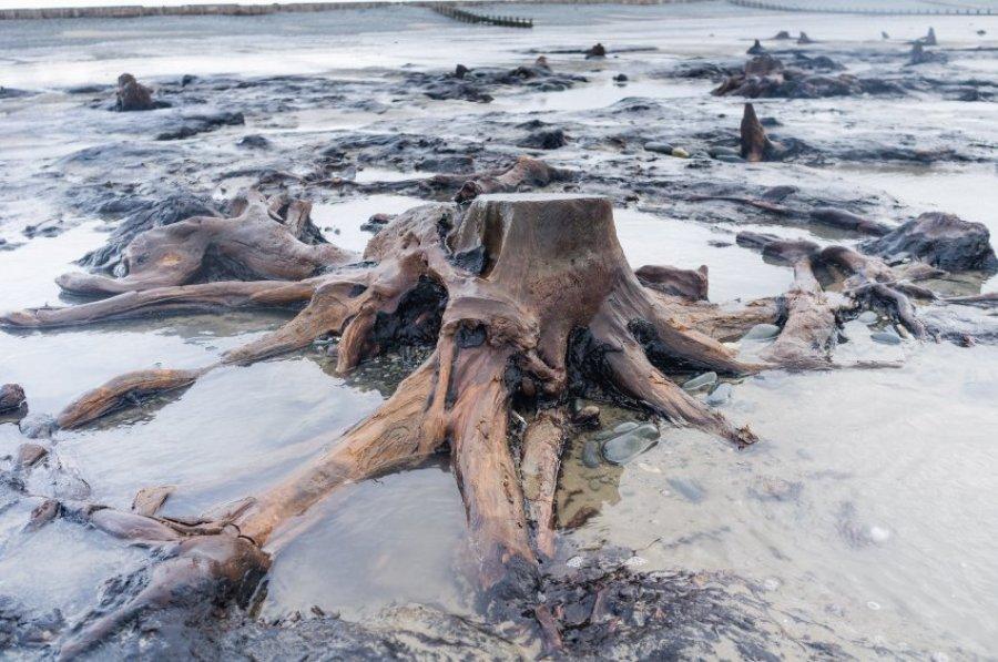 Кардиганский залив