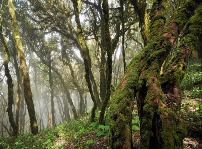 Национальный парк Гарахонай на Канарах