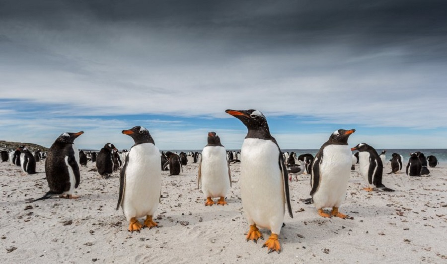 National Geographic Traveller Photography Competition