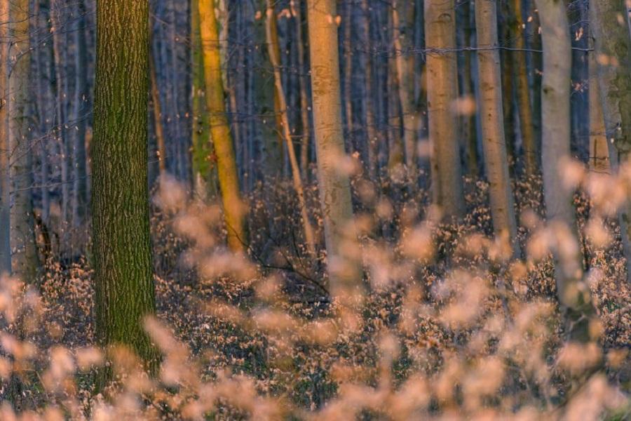Национальный парк Хайнрих, Германия