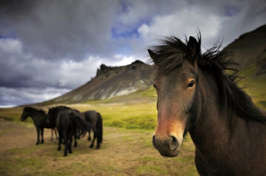 2. Западная Исландия