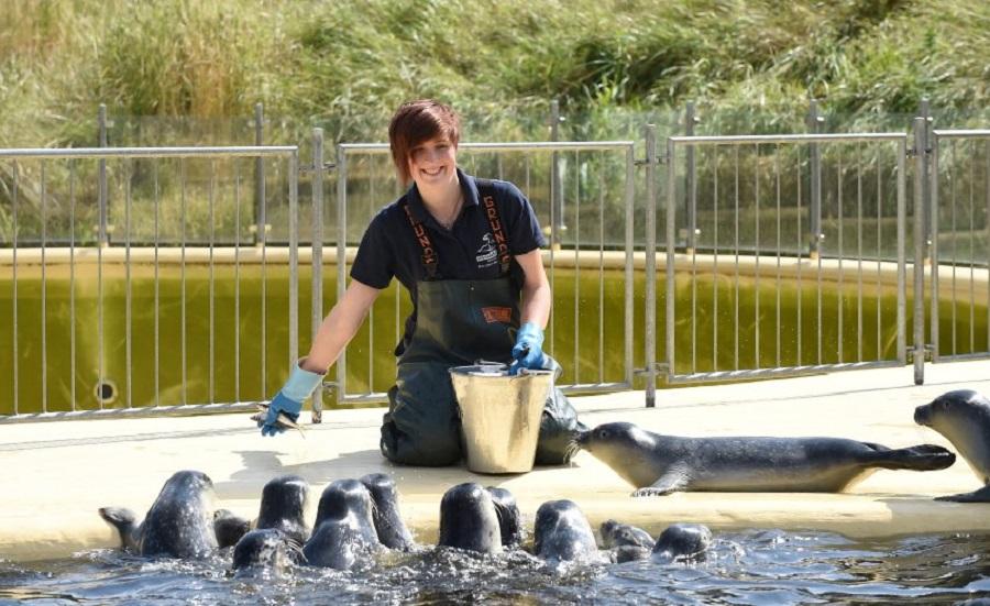 В Германии спасают детенышей тюленей