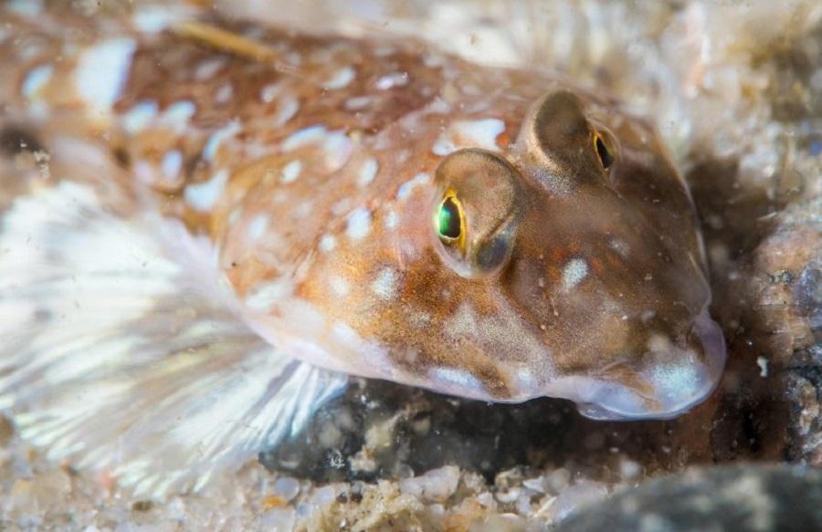 Подводный мир у острова Зюльт