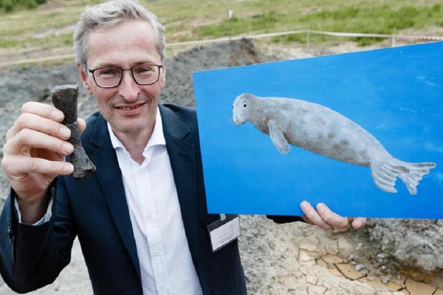 Такие тюлени жили 11 млн. лет назад