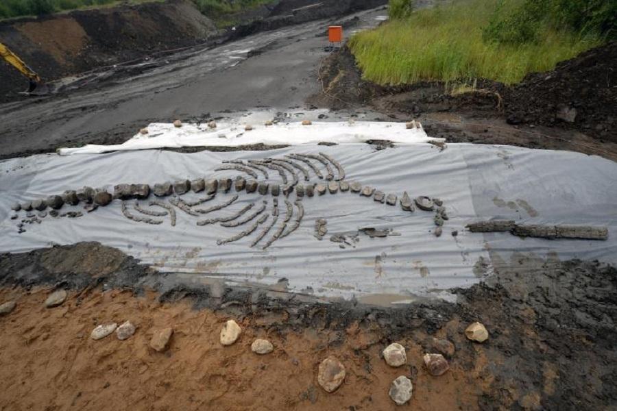 Скелет древнего тюленя