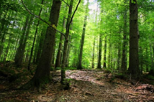 Девственные леса Румынии