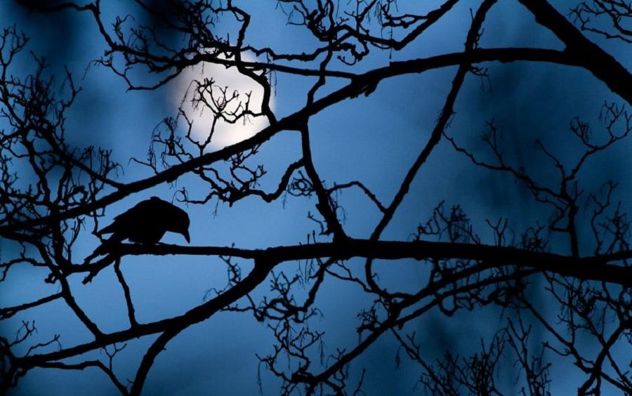 Луна и ворона