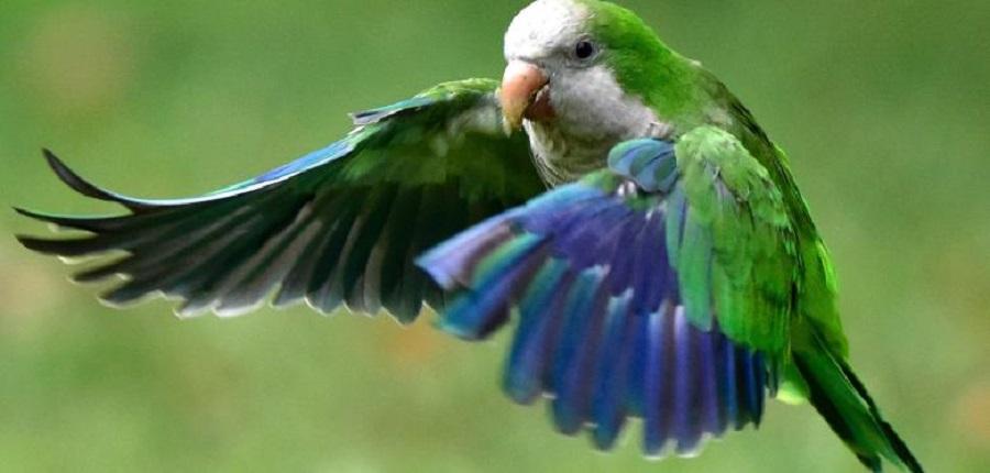 Попугай в парке Атенас