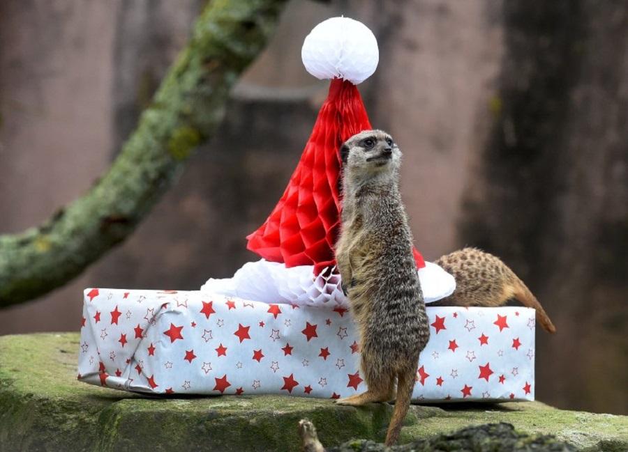 В подарок животное 13