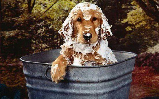 Мытье собаки