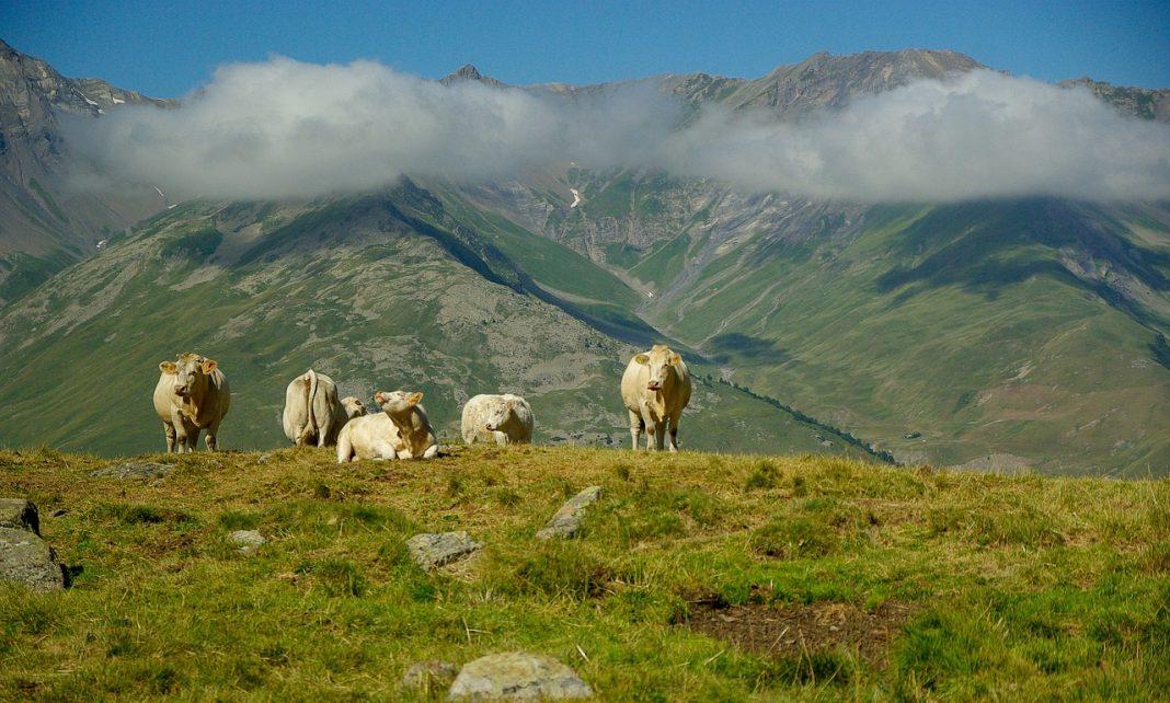 пастбище в Альпах